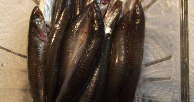 Siebrands Fischereibetrieb in Krummhörn