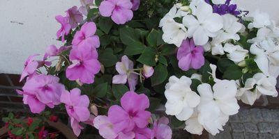 Blumen Böttjer in Ganderkesee