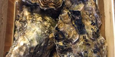 Siebrands Fischereibetrieb / Online Krabben und Fischversand fish4me.de in Krummhörn