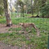 Nadermann Tierpark in Delbrück in Westfalen