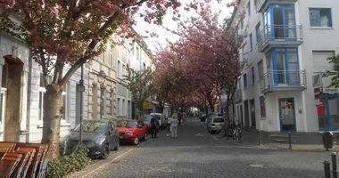 Kirschbaumblüte im April in Bonn