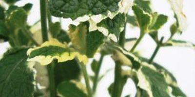 Gartenbau Willi Rankers Biobetrieb in Straelen