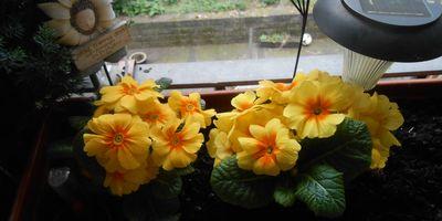 Blume 2000 Hilden in Hilden