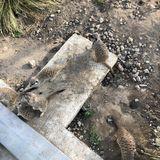 KALISTO gGmbH Spiel- und Tier-Oase KALISTO in Kamp Lintfort