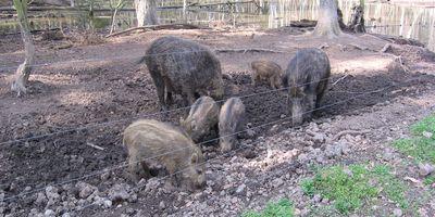 Wildpark Alte Fasanerie in Klein Auheim Stadt Hanau