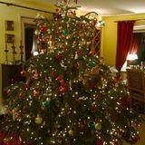 Weihnachtsbaumverkauf Wellingsbüttel beim Ristorante La Casetta in Hamburg