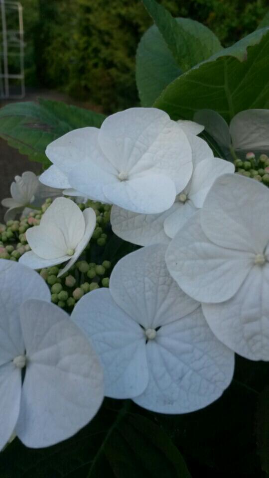 Pflanzen Kolle Gartencenter Gmbh Co Kg