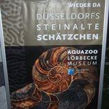 Aquazoo-Löbbecke Museum Düsseldorf in Düsseldorf