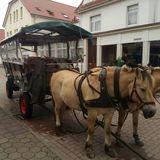 Akkermann Ommo jun. Kutschfahrten in Borkum
