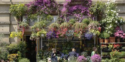 Huber Gudrun Blumen und Pflanzen in Heidelberg