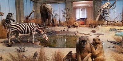 Zoologisches Forschungsmuseum Alexander Koenig in Bonn
