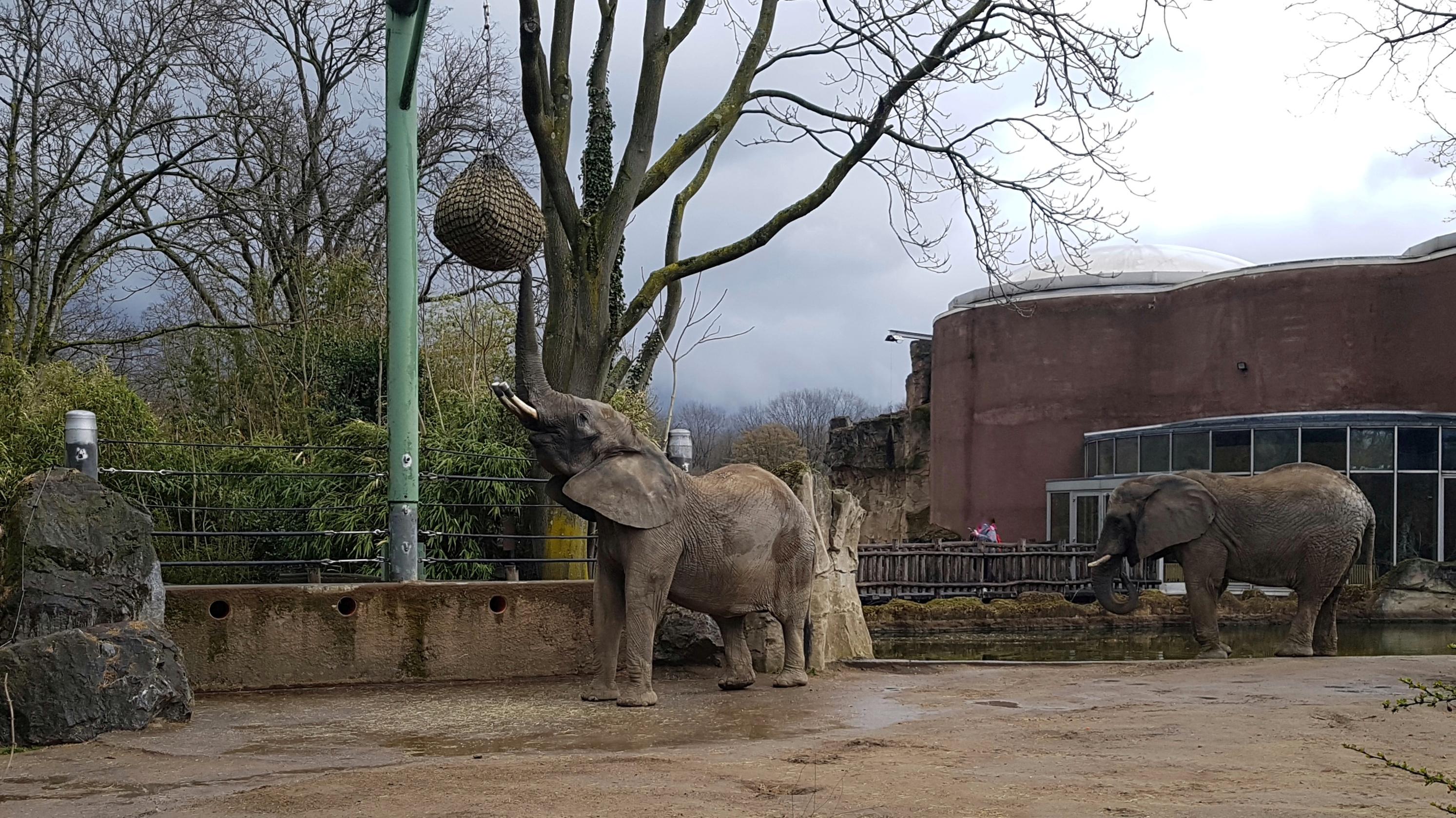 Duisburg parkplatz zoo Zooparkplatz wieder