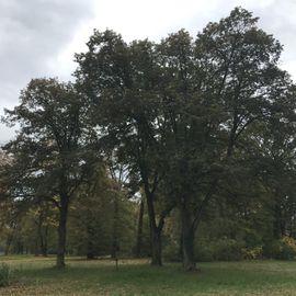 Schloss und Park Sacrow in Sacrow Stadt Potsdam
