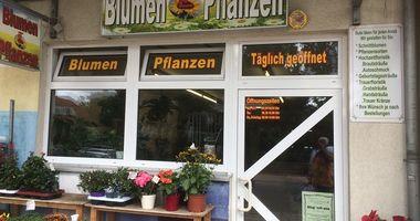 Blumen und Pflanzen in Hohen Neuendorf
