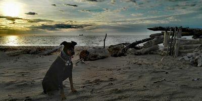 Manufaktur für Hundeleinen aus Segeltau in Sassnitz
