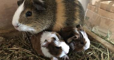 Tierarztpraxis an der Elster in Leipzig