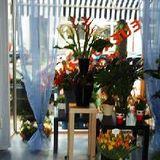 Blumen Steinfort in Düsseldorf