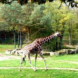 Tiergarten der Stadt Nürnberg in Nürnberg