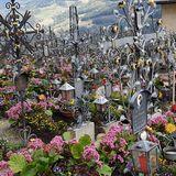 Blumen Haberler in Neumarkt in der Oberpfalz
