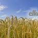 Elkan GmbH Ratingen in Ratingen