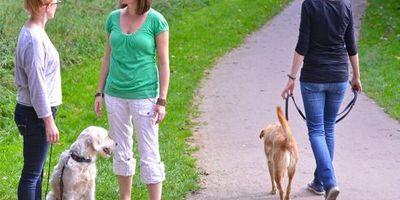 Verena Dzur - Coaching für Mensch und Hund in Oldenburg in Oldenburg