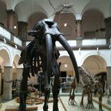 Paläontologisches Museum in München