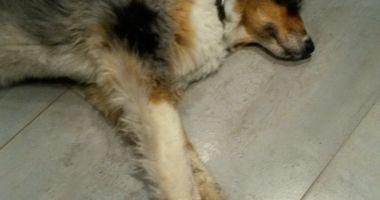 Alsdorfer Hundesalon Sandra Kreutz in Ofden Stadt Alsdorf im Rheinland