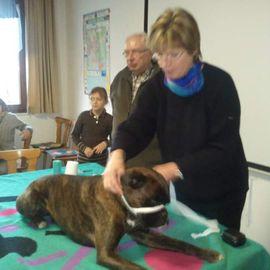Hundeschule Heidelberg im Verein für deutsche Schäferhunde SV e.V. in Heidelberg