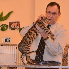 Al Janna Bengalkatzen in Dillenburg