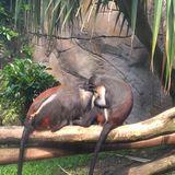 Zoo Leipzig in Leipzig