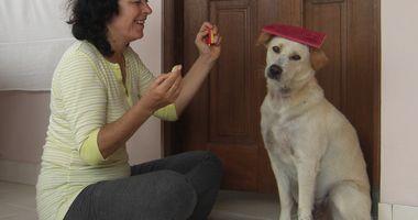 Cityhunde - Hundeschule, Verhaltensberatung in Zwickau