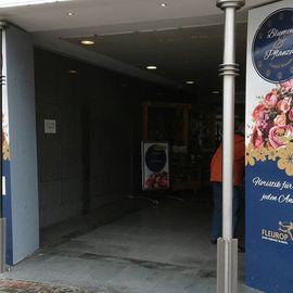Blumen und Pflanzen GmbH Blumenfachgeschäft in Wismar in Mecklenburg