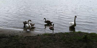 Der Flakensee in Woltersdorf bei Erkner