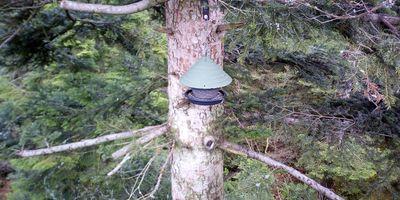 Baumwipfelpfad Schwarzwald in Bad Wildbad