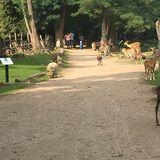 Wildpark Frankfurt (Oder) in Frankfurt an der Oder