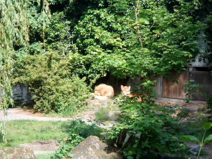Garten Münster westfälischer zoologischer garten münster gmbh allwetterzoo 43