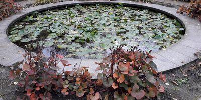 Gärten der Welt in Berlin