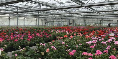 Prahl Gartenbaubetrieb GbR in Amalienfelde Stadt Kremmen