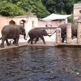Zoo Hannover in Hannover
