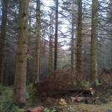 Nationalpark Harz - Der Brocken in Oberharz am Brocken