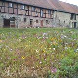 Stiftung Dome und Schlösser in Sachsen-Anhalt Stiftung Kloster Michaelstein in Michaelstein Stadt Blankenburg im Harz