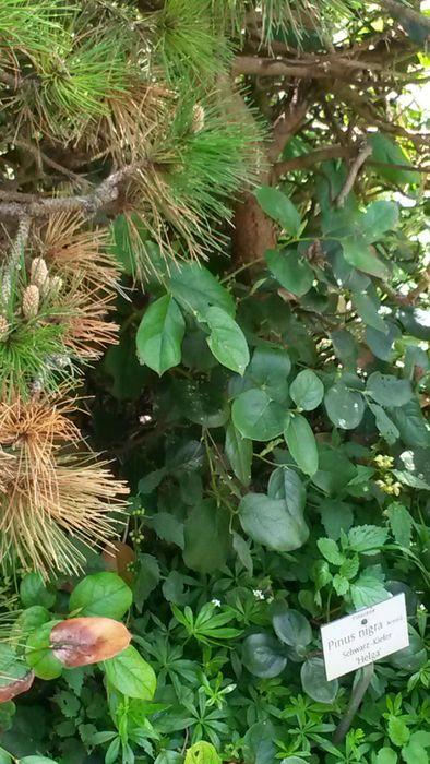 botanischer garten m nchen nymphenburg 18 bewertungen m nchen nymphenburg menzinger str. Black Bedroom Furniture Sets. Home Design Ideas