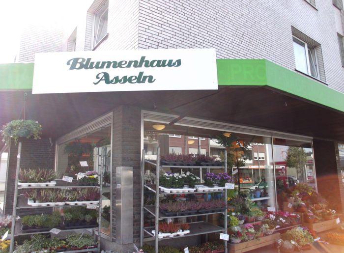 bilder und fotos zu blumenhaus asseln holland blumenhaus