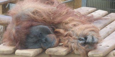 Zoo Dortmund in Dortmund