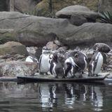 Zoologischer Garten in Dresden