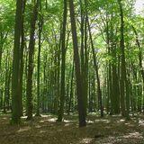 Gedenkstätte Todesmarsch im Belower Wald in Wittstock an der Dosse