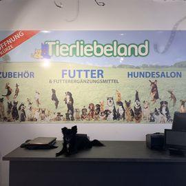 Bild zu Tierliebeland in Köln