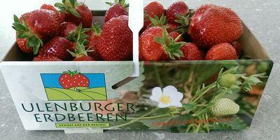 Ulenburger Erdbeeren Familie Esser in Löhne
