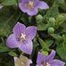 Blumenhaus Glodny Blumenfachgeschäft in Cottbus