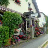 Blumen VERGISSMEINNICHT in Uttenreuth